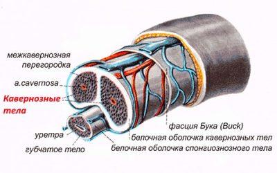 Изображение 8